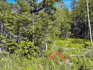 Photo 2: Lot 21-3 Alma Road in Loch Broom: 108-Rural Pictou County Vacant Land for sale (Northern Region)  : MLS®# 202120251