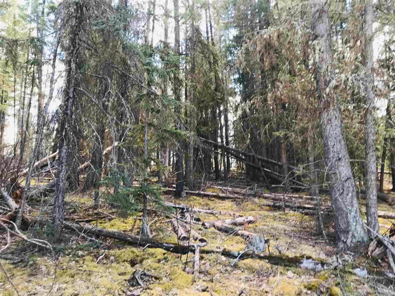 Photo 4: Photos: DL 1140 W MEIER Road: Cluculz Lake Land for sale (PG Rural West (Zone 77))  : MLS®# R2580023