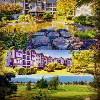 Main Photo: 315 19677 Meadow Gardens Way: Condo for sale : MLS®# R2104296