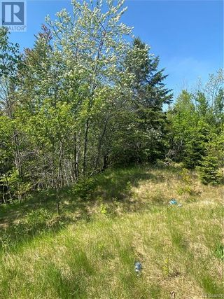 Photo 11: 74.62 Acres Route 127 in Bayside: Vacant Land for sale : MLS®# NB058351