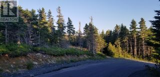 Photo 3: 18-24 Butts Road in Spaniard's Bay: Vacant Land for sale : MLS®# 1234275