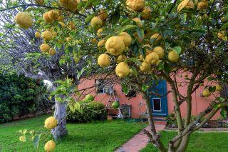 Photo 19: OCEAN BEACH House for sale : 2 bedrooms : 4303 Santa Cruz Ave in San Diego