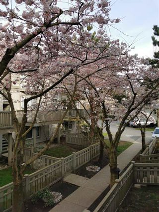 Photo 36: 144 3880 WESTMINSTER HIGHWAY in Richmond: Terra Nova Townhouse for sale : MLS®# R2573549