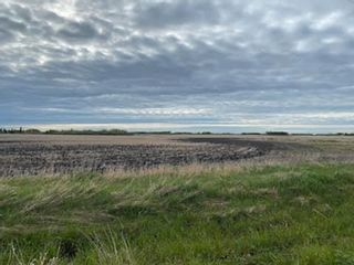 Photo 4: 55117 RR235: Rural Sturgeon County Rural Land/Vacant Lot for sale : MLS®# E4247528