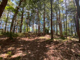 Photo 11: 665 South Range Cross Road in South Range: 401-Digby County Residential for sale (Annapolis Valley)  : MLS®# 202123570