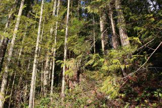"Photo 11: LOT D 5680 CARMEL Place in Sechelt: Sechelt District Land for sale in ""TUWANEK"" (Sunshine Coast)  : MLS®# R2524461"