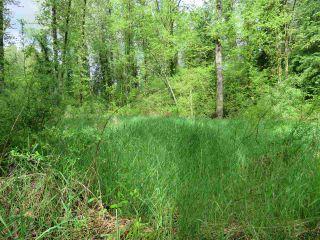 Photo 6: LOT 1 287TH Street in Maple Ridge: Whonnock Land for sale : MLS®# R2525499