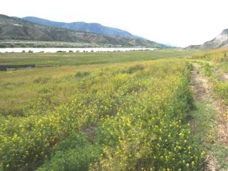 Photo 24: 2511 E SHUSWAP ROAD in : South Thompson Valley Lots/Acreage for sale (Kamloops)  : MLS®# 135236
