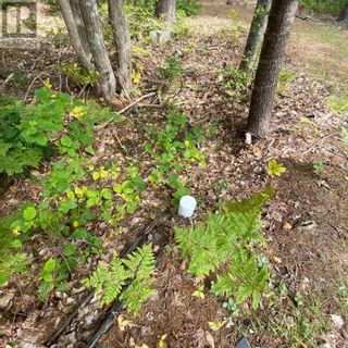 Photo 12: 317 Forest Point Loop in Labelle: Vacant Land for sale : MLS®# 202124977
