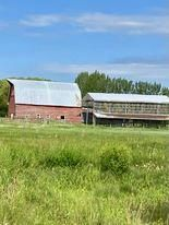 Photo 10:  in Killarney: Agriculture for sale : MLS®# 202116569