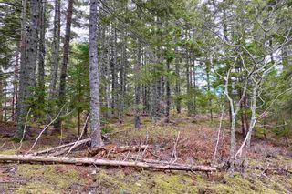 Photo 6: Indian Path Road in Indian Path: 405-Lunenburg County Vacant Land for sale (South Shore)  : MLS®# 202111377