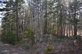 Photo 3: Lot Ridge Road in Hillgrove: 401-Digby County Vacant Land for sale (Annapolis Valley)  : MLS®# 202108522