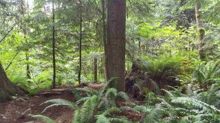 """Photo 9: 14.65AC BARRETT STREET in Mission: Mission BC Land for sale in """"Silverhill"""" : MLS®# R2079511"""