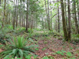 Photo 6: 10630 Tilly Rd in Port Alberni: PA Sproat Lake Land for sale : MLS®# 879576