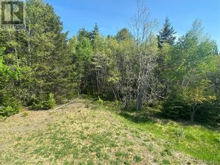 Photo 13: 74.62 Acres Route 127 in Bayside: Vacant Land for sale : MLS®# NB058351
