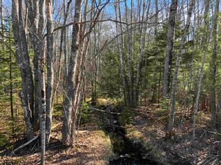 Photo 2: Lot Hall Road in South Greenwood: 404-Kings County Vacant Land for sale (Annapolis Valley)  : MLS®# 202110363