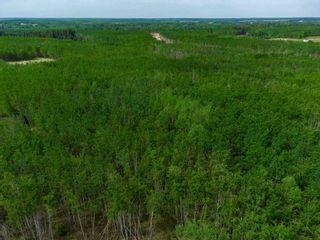 Photo 16: TWP 624 Rge Rd 423: Rural Bonnyville M.D. Rural Land/Vacant Lot for sale : MLS®# E4227702