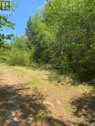 Photo 4: 74.62 Acres Route 127 in Bayside: Vacant Land for sale : MLS®# NB058351