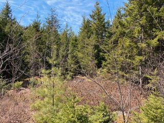 Photo 1: 65 Eaglet Lane in Musquodoboit Harbour: 35-Halifax County East Vacant Land for sale (Halifax-Dartmouth)  : MLS®# 202109854
