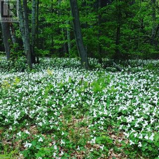 Photo 3: 0 HERRON Road in Grafton: Vacant Land for sale : MLS®# 40088658