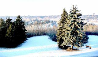 Photo 35: 11823 SASKATCHEWAN Drive in Edmonton: Zone 15 House for sale : MLS®# E4241719