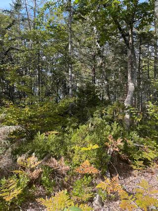 Photo 8: Lot 3 103 Highway in Birchtown: 407-Shelburne County Vacant Land for sale (South Shore)  : MLS®# 202125569