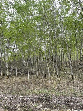 Photo 5: E Second Street South in Endeavour: Lot/Land for sale : MLS®# SK856274