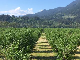 Photo 4: 47805 BALLAM Road in Chilliwack: Fairfield Island Agri-Business for sale : MLS®# C8033737