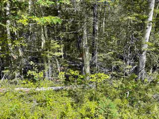 Photo 3: Lot 21-3 Alma Road in Loch Broom: 108-Rural Pictou County Vacant Land for sale (Northern Region)  : MLS®# 202120251