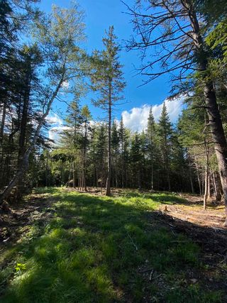 Photo 5: Lot Highway 4 False Bay Brook in River Bourgeois: 305-Richmond County / St. Peters & Area Vacant Land for sale (Highland Region)  : MLS®# 202123291