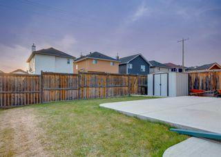 Photo 44: 135 SADDLERIDGE Close NE in Calgary: Saddle Ridge Detached for sale : MLS®# A1101462