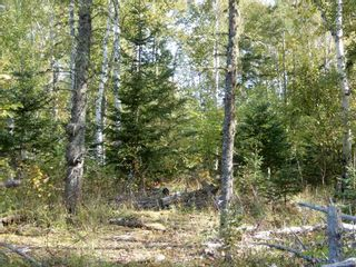 Photo 1: Tanner Hill Road in Limerock: 108-Rural Pictou County Vacant Land for sale (Northern Region)  : MLS®# 202020165