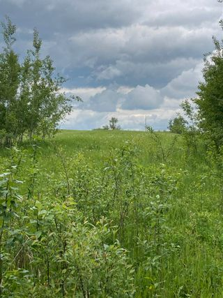 Photo 3: TWP 502 RR 215: Rural Leduc County Rural Land/Vacant Lot for sale : MLS®# E4249465