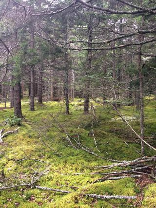 Photo 3: Lot X- 85R Beamish Road in East Uniacke: 105-East Hants/Colchester West Vacant Land for sale (Halifax-Dartmouth)  : MLS®# 202123580