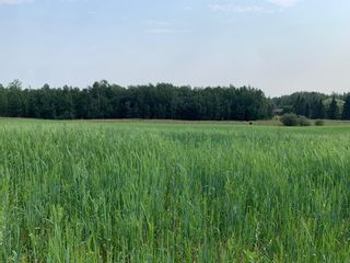 Photo 2: Hwy 616 RR 10: Rural Wetaskiwin County Rural Land/Vacant Lot for sale : MLS®# E4258071