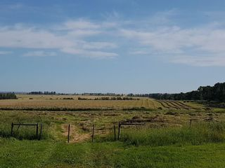 Photo 7: 303 Township: Rural Mountain View County Land for sale : MLS®# C4303606