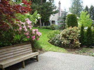 Photo 13: 58 21848 50 Avenue in Cedar Crest: Murrayville Home for sale ()  : MLS®# F1104732