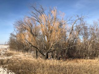 Photo 2: 0 53N Road: RM Tache Vacant Land for sale (R05)  : MLS®# 202109286