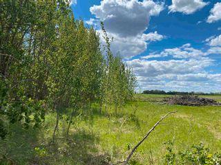 Photo 7: NE 34-49-27-W4 none: Rural Leduc County Rural Land/Vacant Lot for sale : MLS®# E4246771