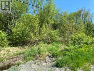 Photo 10: 5264 Rte 770 in Rollingdam: Vacant Land for sale : MLS®# NB058269