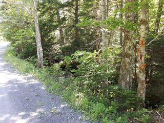 Photo 12: Meiklefield Road in Meiklefield: 108-Rural Pictou County Vacant Land for sale (Northern Region)  : MLS®# 202117504
