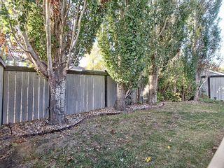 Photo 12: 4314 37B Avenue in Edmonton: Zone 29 House for sale : MLS®# E4262749