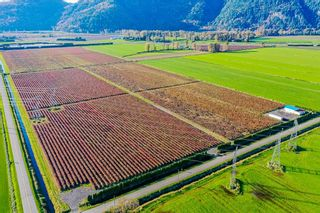 Photo 9: 4081 DIXON Road: Agri-Business for sale in Abbotsford: MLS®# C8035569