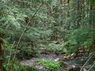 Photo 18: 5999 FORBIDDEN PLATEAU ROAD in COURTENAY: CV Courtenay West House for sale (Comox Valley)  : MLS®# 787510