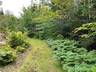Photo 2: Gillis Point Road in Gillis Point: 209-Victoria County / Baddeck Vacant Land for sale (Cape Breton)  : MLS®# 202120644