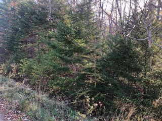Photo 2: Lot Tracey Road in Brookside: 40-Timberlea, Prospect, St. Margaret`S Bay Vacant Land for sale (Halifax-Dartmouth)  : MLS®# 202022889