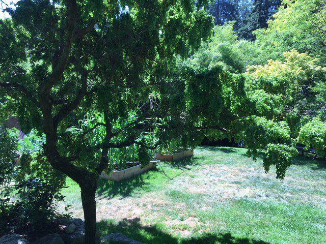 Photo 3: Photos: 2595 SYLVAN Drive: Roberts Creek House for sale (Sunshine Coast)  : MLS®# R2481642