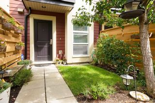 """Photo 46: 25 19477 72A Avenue in Surrey: Clayton Townhouse for sale in """"Sun at 72"""" (Cloverdale)  : MLS®# R2094312"""