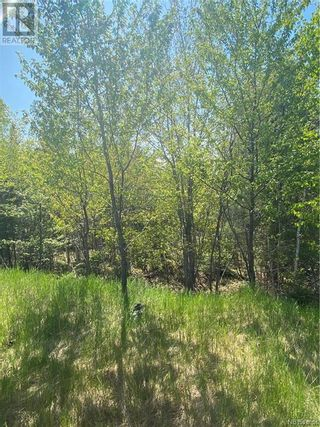 Photo 7: 74.62 Acres Route 127 in Bayside: Vacant Land for sale : MLS®# NB058351