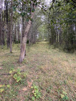 Photo 9: RR 275 Twp 482: Rural Leduc County Rural Land/Vacant Lot for sale : MLS®# E4261137